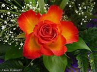 Другие декоративные растения в нашем быту